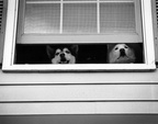 Lexy and Nicky looking out the window (front view) (105810-35)