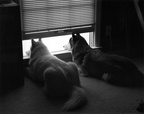 Lexy and Nicky looking out the window (rear view) (105810-26)