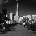 Transamerica Bldg from Pier 5 (infrared) (105040-34)